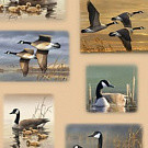 "Ткань Quilting Treasures 26711-A ""Flying Geese"""